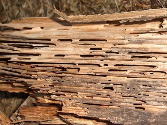 ttcouverture-traitement-bois-termites